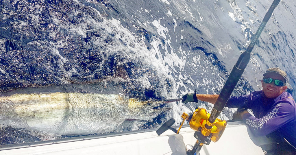 A lovely black marlin ready for release